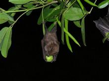 faune foret seche, ecosysteme tropiacl, gaudeloupe, antilles