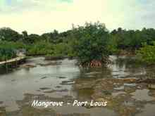 mangrove port louis, ecosysteme tropical, guadeloupe, antilles