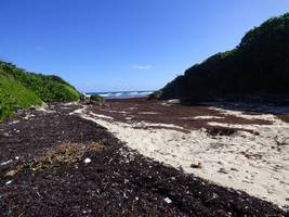 anse patate, moule bois baron, grande terre nord, guadeloupe