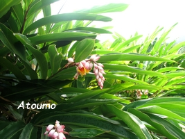 atoumo jardins guadeloupe