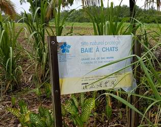 baie a chats, birmingham, bmao, guadeloupe