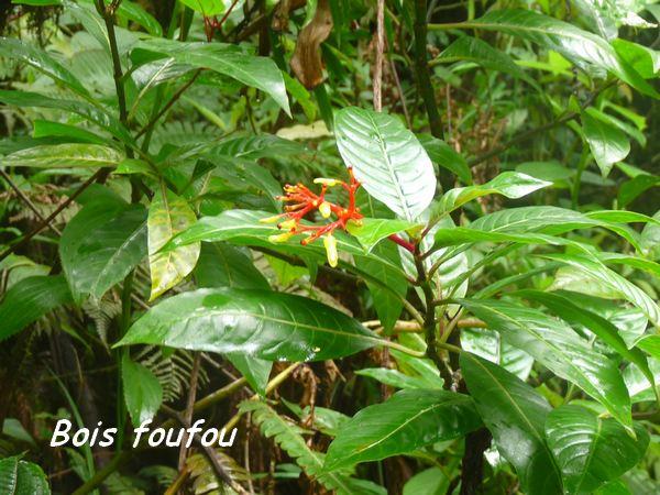arbuste foret humide L