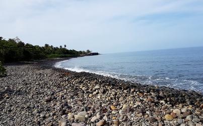 mamalier littoral cailloux cote sous le vent guadeloupe