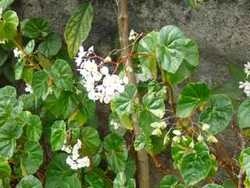 fleur, balade, saut matouba, basse terre, guadeloupe, antilles