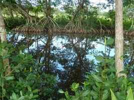 Canal des rotours, Morne à l`eau, Grande Terre, Guadeloupe