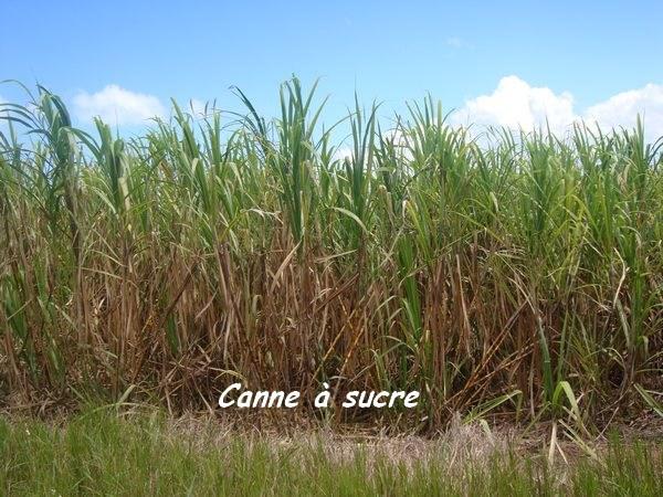 cannes, trace 36 mois L