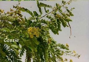 casse jardins guadeloupe