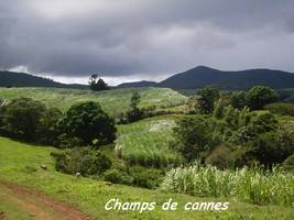 champs, solitude, trace 36 mois, ste rose, basse terre, guadeloupe