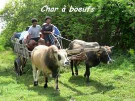 Kabouet, Charette à boeufs, Gaschet