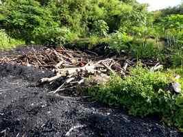 charbon, mahaudière, anse bertrand, grande terre, Guadeloupe