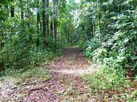 chemin forestier , sarde, capesterre