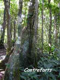 arbre contreforts, B Argent