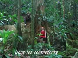 acomat, arbre, bras de fort, goyave, guadeloupe