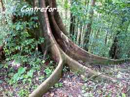 Contreforts d`Acomat boucan, Piton de Bouillante