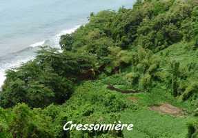 Cressonnière, Grande Pointe