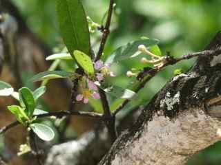 balade ilet cabri les saintes cerise pays fleur foret seche guadeloupe