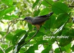 oiseau, balade, dos d`ane, basse terre, guadeloupe, antilles
