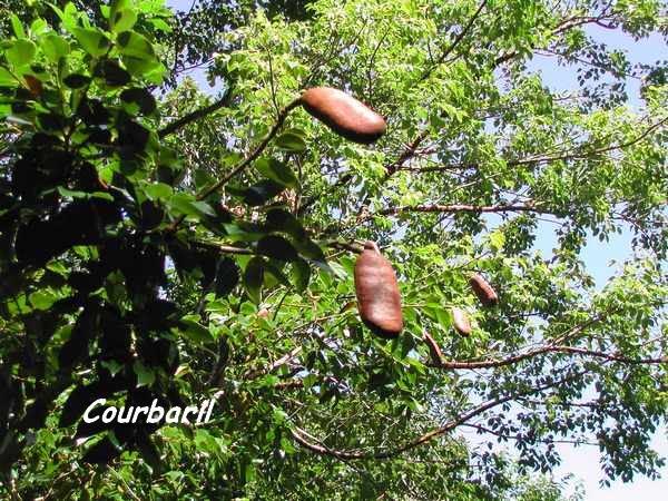 foret seche arbre L