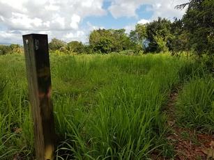 sentier mangrove Pte Bacchus Pt Bourg Guadeloupe