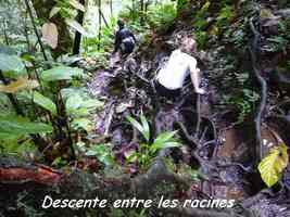 sentier, racines, descente, chutes moreau, goyave, basse terre nord, guadeloupe