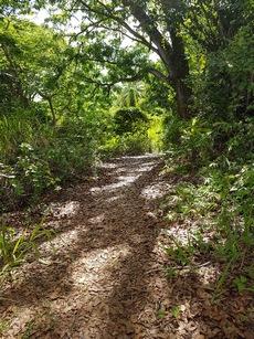 descente mangrove pte Bacchus pt Bourg Guadeloupe