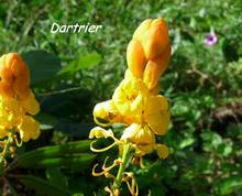 balade , plante jardin, terre de bas, les saintes, iles guadeloupe, antilles