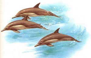 mammifère marin, pelagos, grands fonds, ecosysteme marin, guadeloupe, antilles,