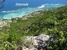 foret seche, ecosysteme tropical, guadeloupe, antilles