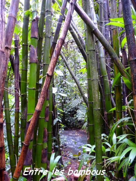bambous, nez cassé, st claude, basse terre, guadeloupe