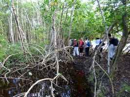 entre mer et mangrove, Port Louis, Grande terre, guadeloupe