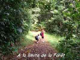 entrée forêt, trace, bras de fort, goyave, guadeloupe