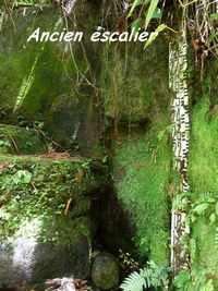 escalier , rivière vx habitants, guadeloupe