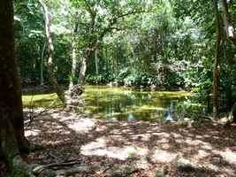 étang , terre de bas, guadeloupe