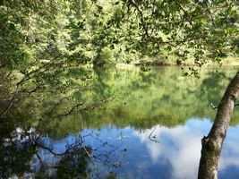 Etang zombi, 3 rivières, guadeloupe