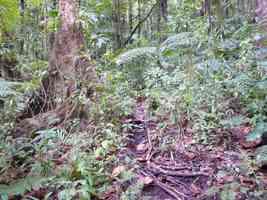 Dans la forêt, sur la limite du Parc National