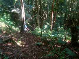 foret moyenne, trace 36 mois, ste rose, basse terre, guadleoupe