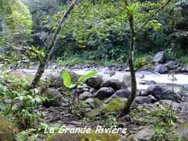 grande rivière, grivelière