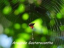 balade terre de bas, araignée, les saintes, iles guadeloupe, antilles