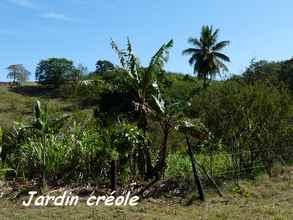 jardin creole, TGT 1, grande terre