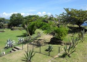 jardin cactées fort terre de haut guadeloupe