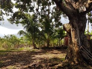 jardin manguier pte bacchus pt bourg guadeloupe