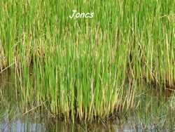 balade stfelix, herbacée, grande terre, guadeloupe, antilles