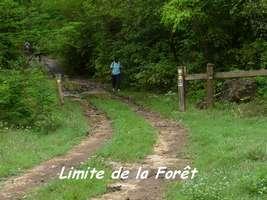 Limite de la forêt domaniale, Poyen
