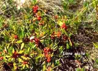 herbacée, balade, barre de cadoue, grande terre, guadeloupe