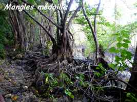 mangle médaille ravine NW Moule