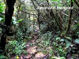 sentier sous les mangles, Trace V Hugues, B Terre