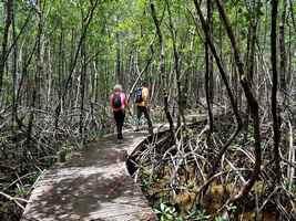 mangrove port louis grande terre guadeloupe