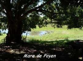 Mare, Poyen