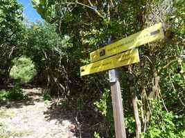 Montée à Bois Baron, Moule bois baron, Grande terre nord, Guadeloupe