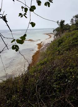 montée trou à coa Bois jolan ste anne Guadeloupe